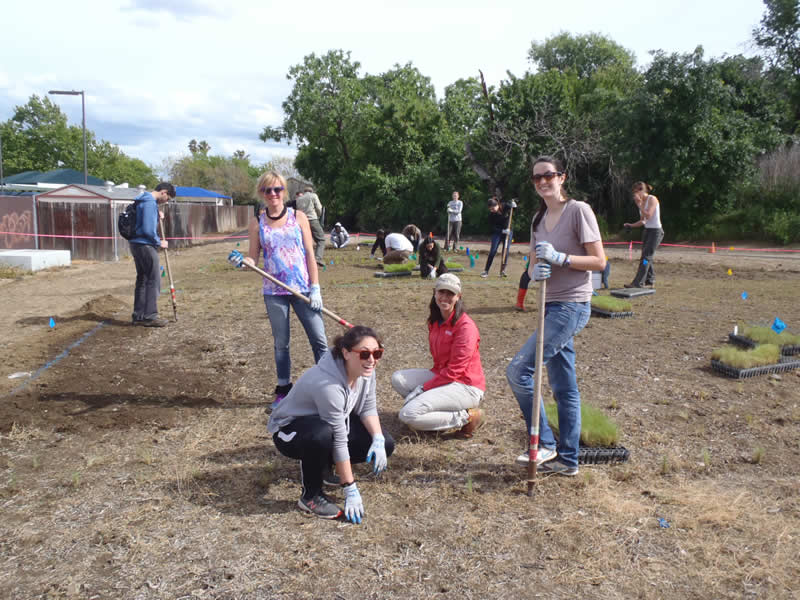 UCD students planting 3 Oaks 1