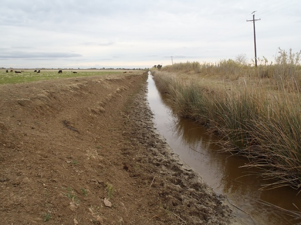 Cattle pasture field drainage